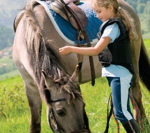 horse-jj15